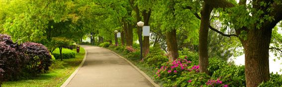 zielen-publiczna